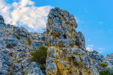 Mountain goats standing on top of rock in Alanya, Turkey