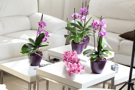 arrangment: Growing pink orchid with petals arrangment on white table