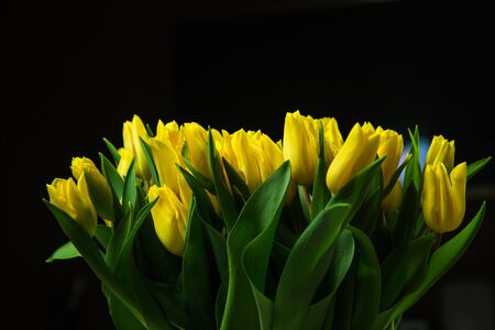 Bouquet of yellow tulips isolated on dark background