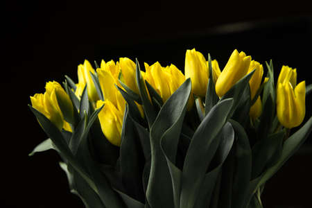 Isolated bouquet of yellow tulips on a black background Reklamní fotografie