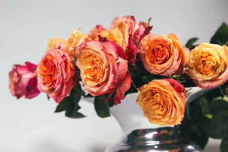 Orange roses in metal vase isolated on gray background