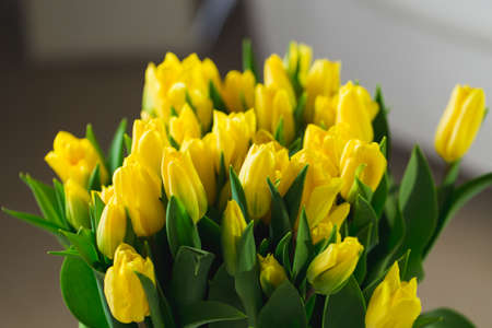 Bouquet of yellow tulips in an interior Reklamní fotografie