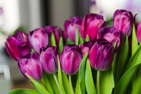 Bouquet of dark-pink tulips in an interior