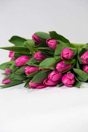 Bouquet of pink tulips isolated on white background vertical Reklamní fotografie