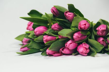 Isolated bouquet of pink tulips laying on a white background Reklamní fotografie