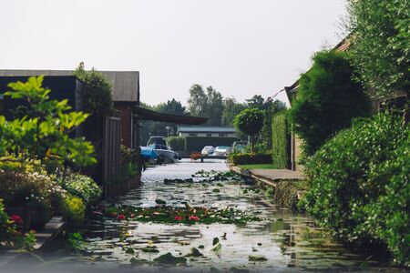 leaves on canal with bushes and boats