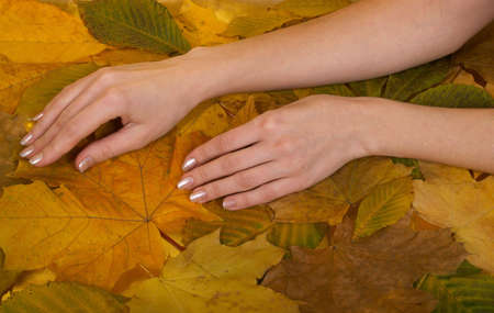 Female hands lie on ������������ leaves of yellow colour  photo