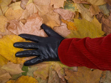 black gloves: Female hand in a glove against yellow autumn leaves         Stock Photo