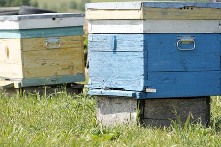 Bees fly into the house. Insects collect honey. Blue bee house close up. Entrance to the hive.