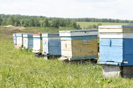 Bee houses are in the meadow. Beehive in the summer in green grass. Bees collect honey. Banco de Imagens