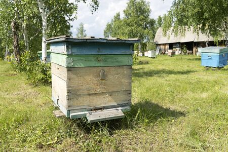 A bee wooden house stands in the forest. Bees collect honey. Birch is growing.