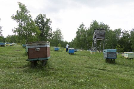 Many bee houses are in the forest. Bee hives on a green meadow. The beekeeper mows the grass.