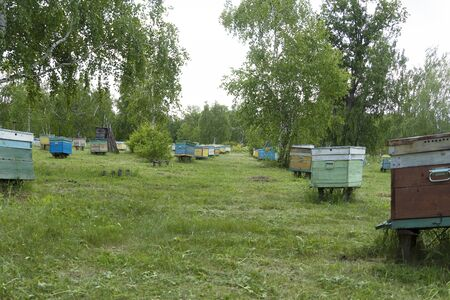 Many bee houses are in the forest. Bee hives on a green meadow. Insects collect honey. Banco de Imagens
