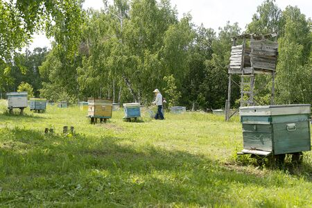 Bee houses are in the forest, white birch trees. The beekeeper mows the grass. Bee hives on a green meadow. Banco de Imagens