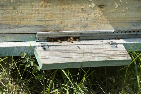 Entrance to the hive, bees collect honey. A house for bees stands in a meadow close-up. Summer green grass.
