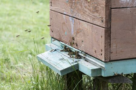 Entrance to a brown wooden beehive closeup. Bees fly into the house. Insects collect honey in a rural meadow.