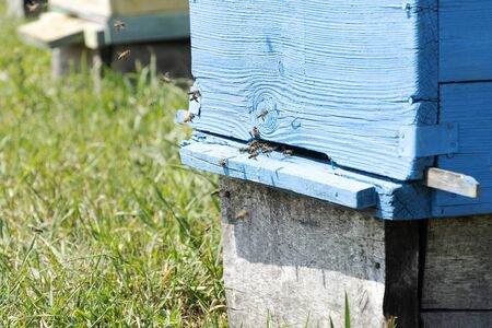 A blue house for bees stands in a meadow. Bees fly into the hive, collect honey. Years green grass. Banco de Imagens