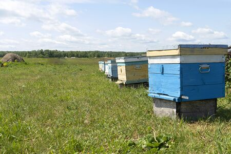 Houses for bees stand in a row in the meadow. Bees collect honey. Bee hives on a green meadow. Banco de Imagens