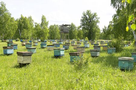 Colony of bees, in the summer on the street there are many houses for bees. Bee hives on a green meadow. Insects collect honey. 免版税图像