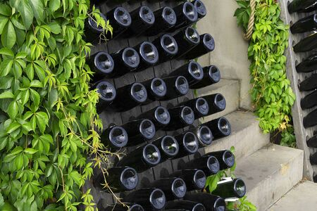 Wine or champagne bottles on a wooden shelf. Like a decoration. Bottom view of wine bottles lying in wine holders. Street, green leaves of the vineyard.