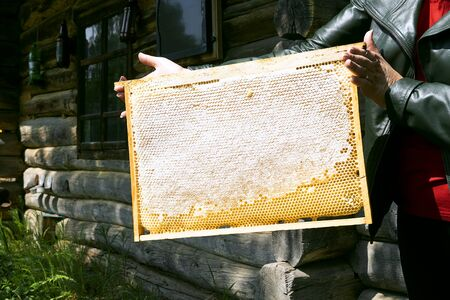 Girl hold a frame with honeycombs filled with honey, without bees. Honey nectar in honeycombs, beekeeping forest. A farm with bees.