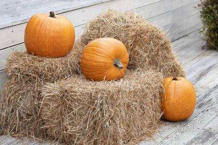 Three yellow pumpkins lies on hay bales. Farm green product. Pumpkin autumn, concept of Halloween and autumn harvest festival. 写真素材