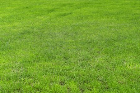 Green grass on a golf course or green lawn. Background from fresh green grass, sports field for football, golf, field hockey, American football, tennis.