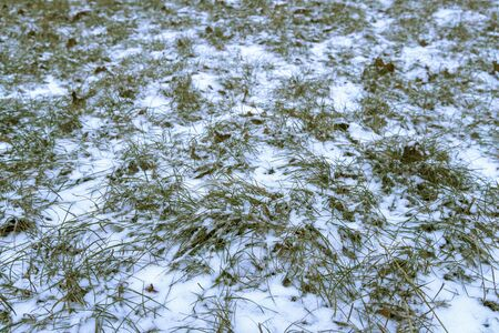 The green grass is covered with white fluffy snow. The first white snow fell on the grass. White fluffy new snow crystals lies on the grass. 写真素材
