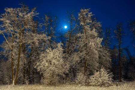 Winter beautiful landscape. The moon shines on the blue sky. Night nature with trees in the snow. A lot of fluffy snow. 스톡 콘텐츠
