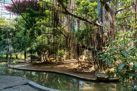 Artificial jungle in the zoo. Creepers hang from the roof, a pond for birds with a shore of stones. Summer is a hot sunny day. Beautiful corner of nature. 写真素材