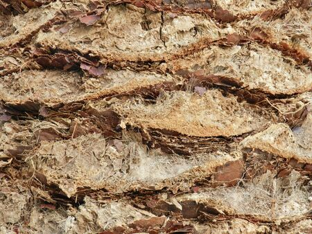 bark palm tree: Abstract palm tree bark texture as background