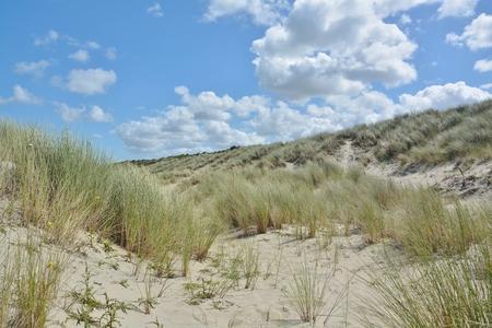 Beautiful sand dunes on the North Sea coast in Renessa, Zeeland, Holland