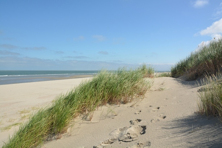 Schöne Sanddünen an der Nordseeküste in Renessa, Zeeland, Holland