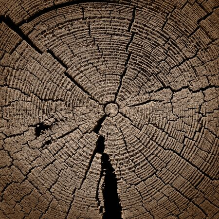 by cu: Cut of the old cracked tree( CU) Stock Photo