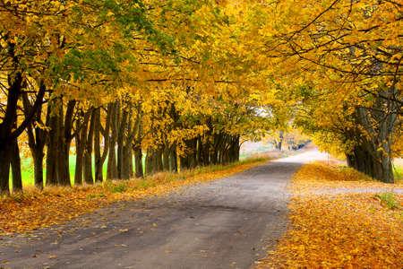 yellow trees: Yellow trees along the road Stock Photo