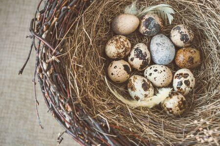 huevos de codorniz: nido de pájaro con huevos de codorniz Foto de archivo