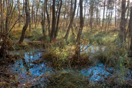 Marshland at the edge of the forest in spring