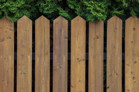 The wooden picket fence is removed against green arborvitae in a garden Zdjęcie Seryjne