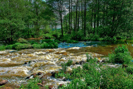 A stormy forest river flows on a sunny summer day