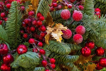 Christmas decorations. Real spruce on the street. Red berries covered with snow, weigh on a branch. close-up. Macro. Xmas