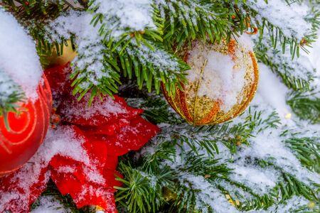 Christmas decorations. A real fir tree covered with snow. Christmas toys balls of red and gold color and a shining garland hang on a branch. Close-up. Macro. Xmas
