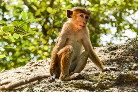 Cute monkey sitting on the rock photo