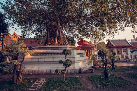 entrance arbor: Beautiful garden with bonsai trees at the temple of Wat Pho. Bangkok, Thailand.