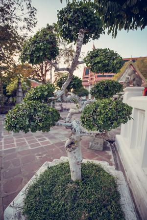 entrance arbor: Beautiful bonsai garden in the temple of Wat Pho. Bangkok, Thailand.