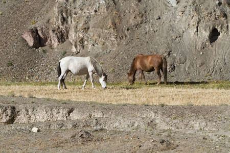 Horses feed in Himalayas Mountains Stock Photo - 12476698