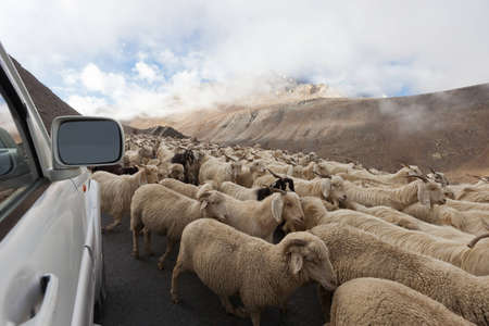 Goats on tht road in Himalayas Mountains photo