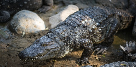 Crocodile in the Indian Reserve Stock Photo - 18728841