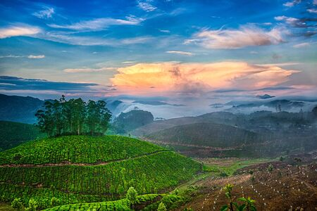 Tea plantations in India. Province Kerala photo