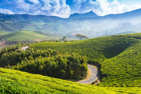 The road through plantations in India. Province Kerala photo