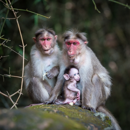 Family of monkeys sitting in the jungle photo